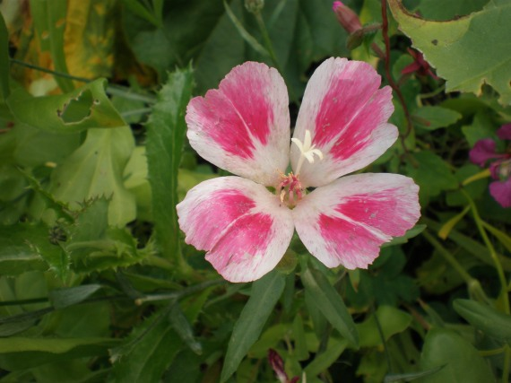 blomma23aug