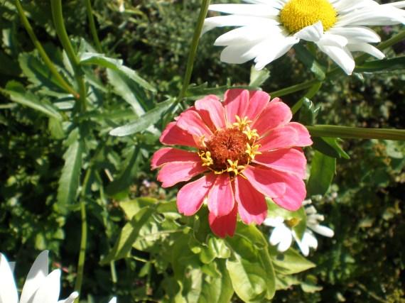 blomma3sept